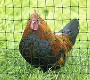 PoultryNet vert, non électrifiable