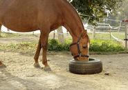 Mangeoire pour pneu
