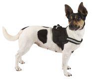 Harnais pour chien Maestro 1.0