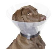 Collerette pour chiens