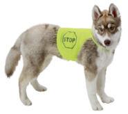Gilet fluorescent pour chien