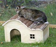 Maison pour rongeur avec toit ondulé Nature