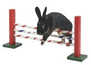 Obstacle pour rongeur Agility